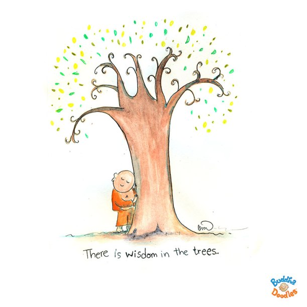 wisdom in the trees
