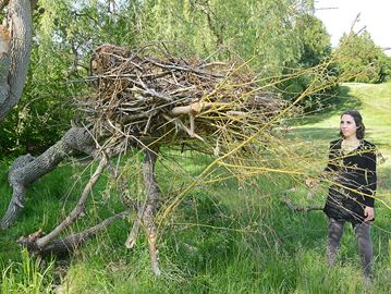 Artist Catherine Faiello - Highland nest art Wed June 15 18 deerhorn cres, Aurora DETAILS/BACKSTORY: Catherine was inspired to speak for the wildlife that will be affected if the proposed development of Highland Gate is approved so she installed an art installation (a large nest) she hopes will make people think when they see it ON SITE CONTACT'S name, cell #, email: Catherine (cell) 514-653-0560